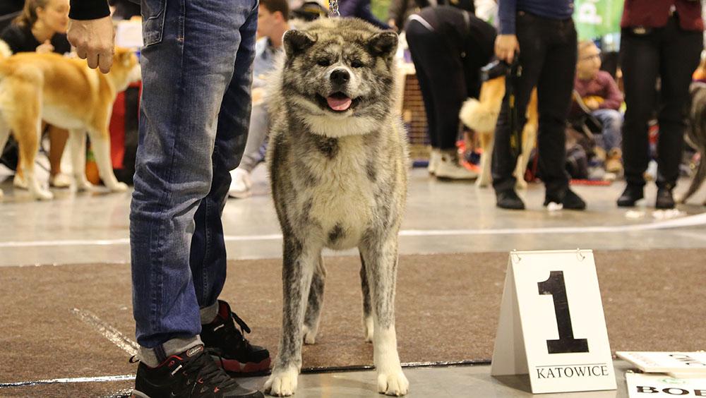XXIV International Dog Show in Katowice