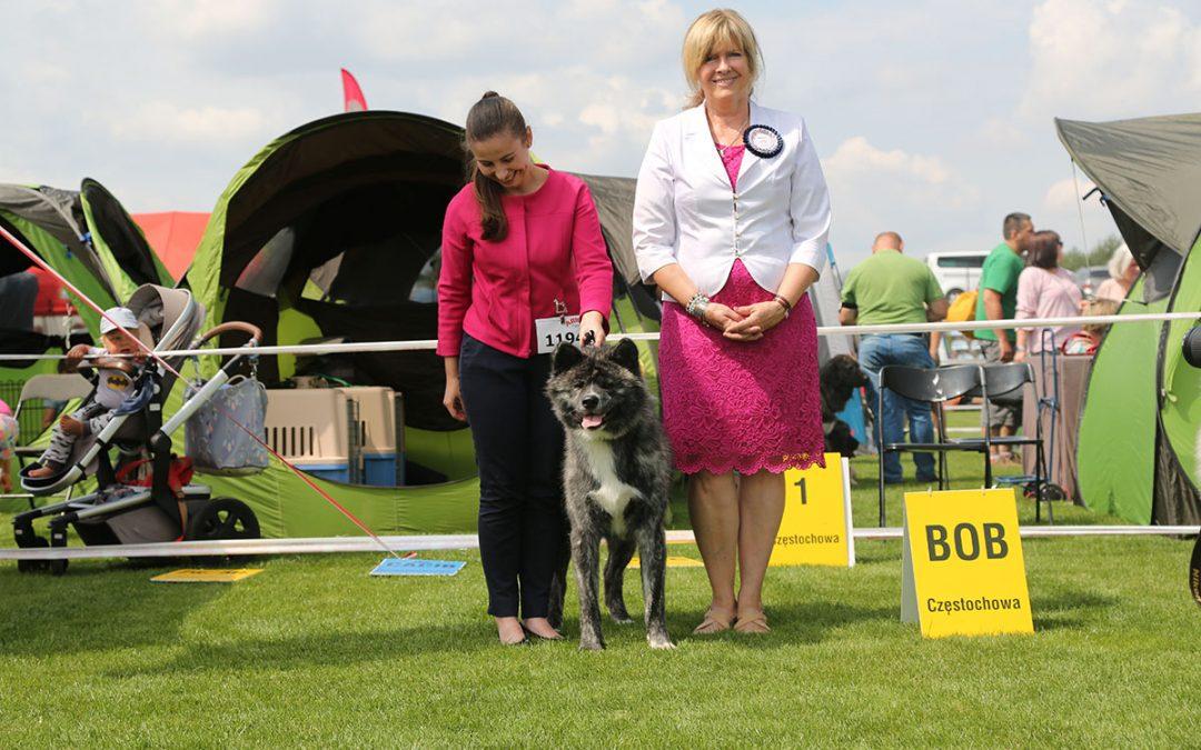 We achieved success again at the International Dog Show in Częstochowa
