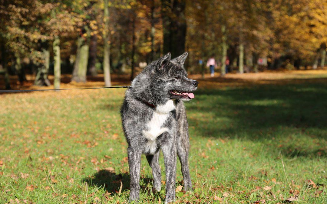 International Dog Show in Leszno