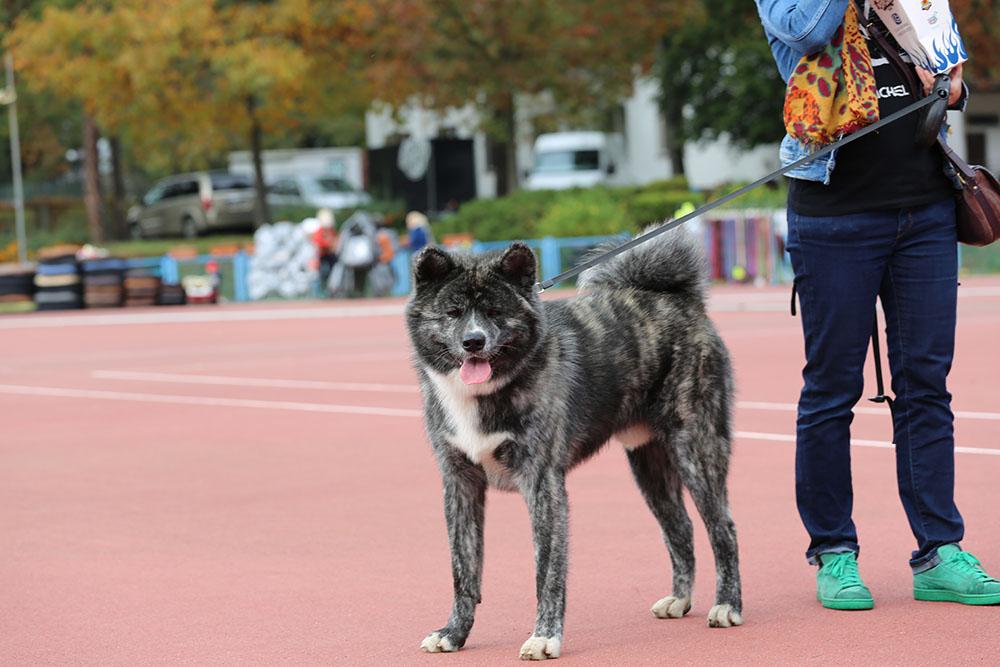 VII International Dog Show (CACIB) Lubin, 18-19.01.2020