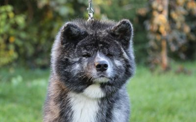 45th National Dog Show in Zabrze
