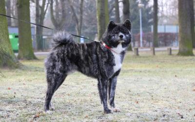 International Dog Show PRESTIGE (CACIB) in Leszno